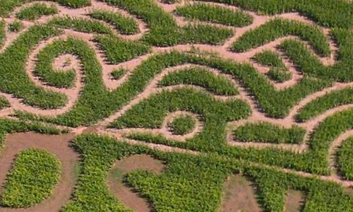 Explore our Family Fun corn maze in Buckeye, Arizona!