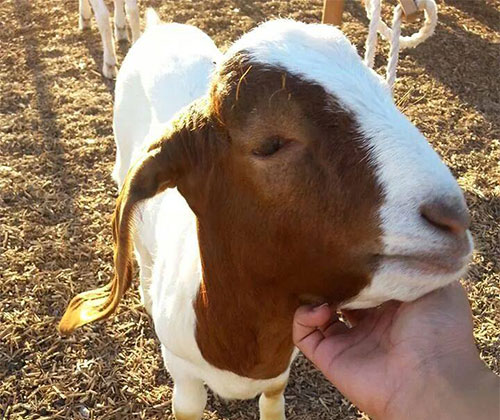 Hands-on Petting Zoo and more family fun activities in Buckeye, AZ