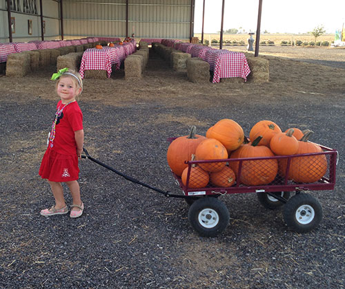 Pick-your-own pumpkins in our u-pick pumpkin patch!